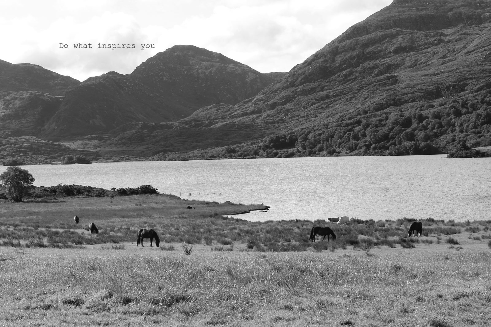 house of kerry a3 fine art photographic print words of 0501 copy do what inspires you horses cows