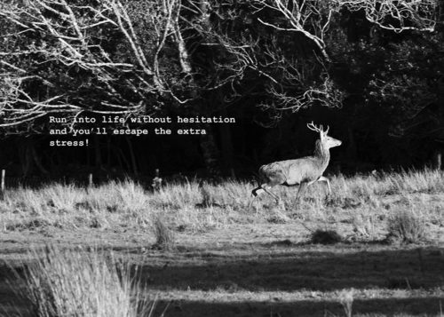 a3-photographic-print-red-deer-words-of-inspiration